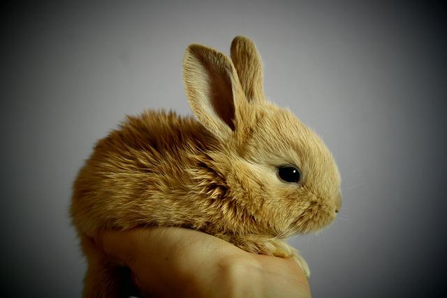 Tipy pro hraní se zakrslým králíkem