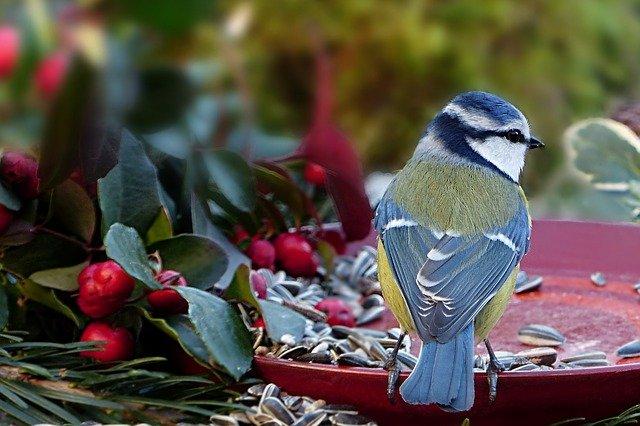 Krmítka pro přezimující ptáčky